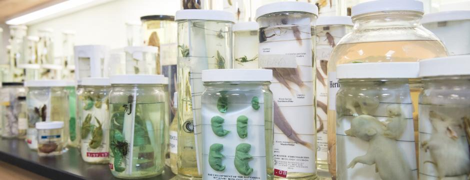 Jars with Biological growth speciamins